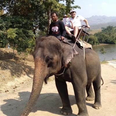 Lecture à dos d'éléphant ...